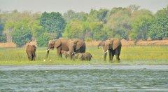 Zimbabwe_Elefanten_ZambeziCruiseSafaris.jpg