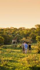 Sdafrika_GuidedWalkSafari_Giraffe_Copyright__SouthAfricanTourism.jpg