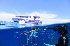 CoralNursery_ReefRestorationFoundation.jpg