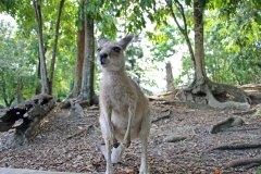 Ella_Kangaroo_WildlifeHabitat.jpg
