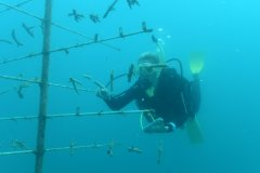 ReefRestorationFoundation2_Volunteer_monitoring_coral_tree.jpg