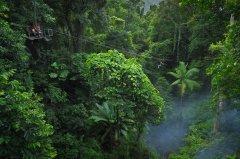JungleSurfing_Daintree.jpg