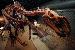 FlindersDiscoveryCentre_DinosaurExhibition_Hughenden.jpg