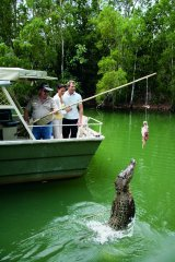 HartleysCrocodileAdventures_CrocFeeding.jpg
