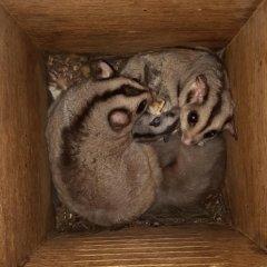 Nestbox_MahoganyGlider_WildlifeHabitat.jpg