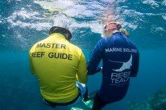 MasterReefGuides_EyeOnTheReefProgram_PhotoCredit_ReefTeachCairns.jpg