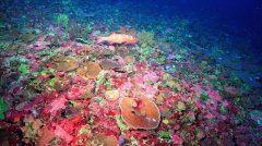 CoralFields_GreatBarrierReef_PhotoCredit_SchmidtOceanInstitute.jpg