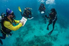 CitizenScienceTour_SurveyingTheReef_CoralNurseryPlanting_PhotoCredit_PassionsOfParadise.jpg
