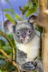 Koala_WildlifePark.jpg