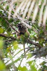 NeradaTeaPlantation_TreeKangaroo.jpg