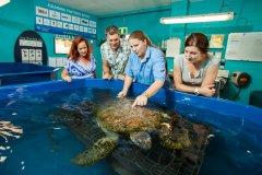 TurtleHospital_ReefHQ_Townsville.jpg